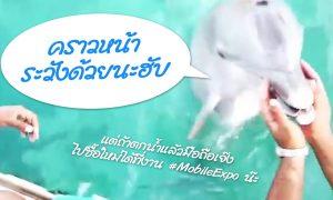 dolphinencounter