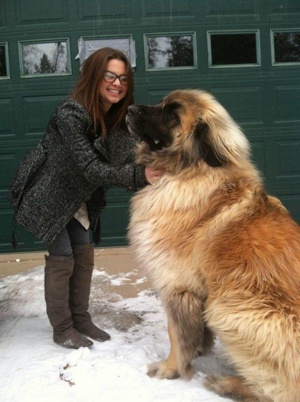 giant-dog-01