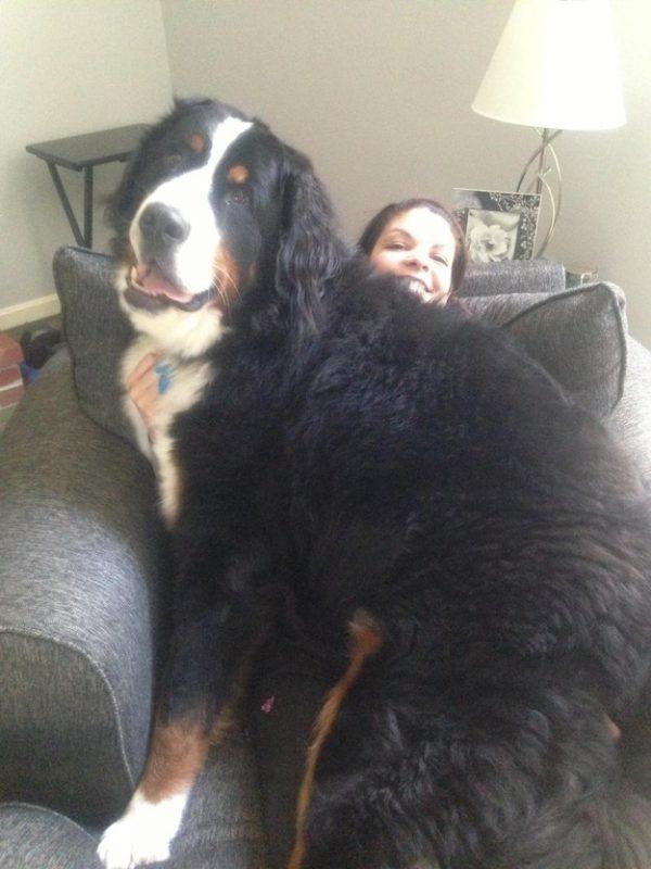 giant-dog-02