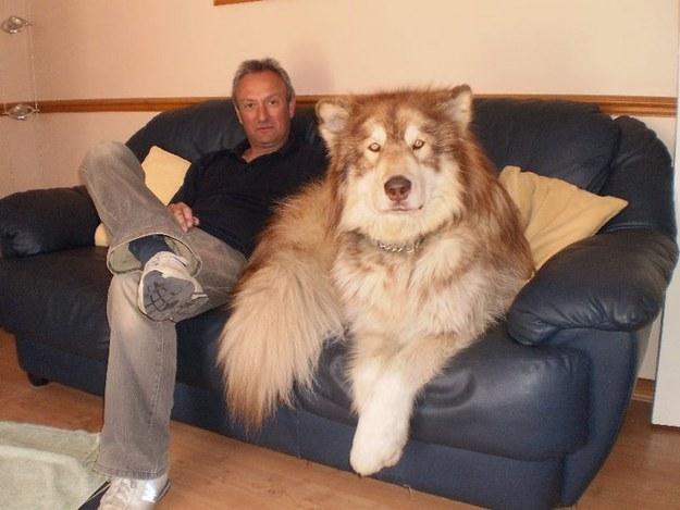 giant-dog-06