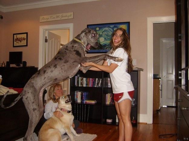 giant-dog-13