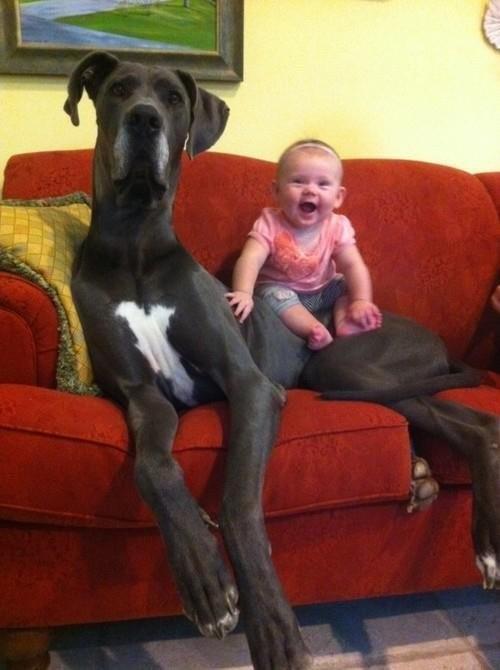 giant-dog-17